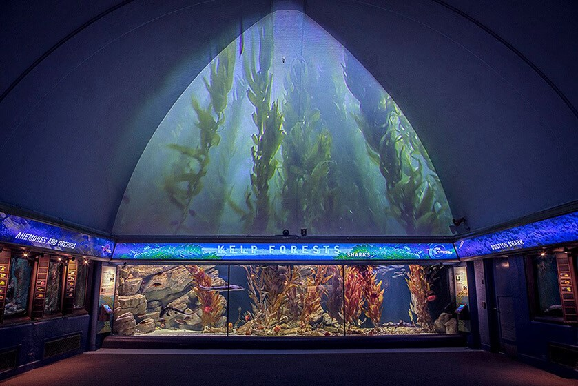 Image of Shedd Aquarium